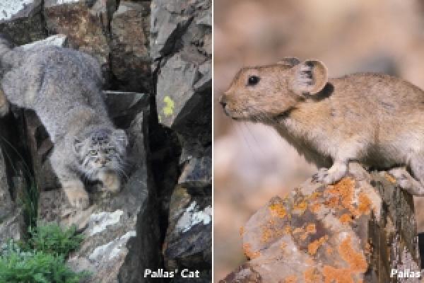 Mongolia 2020 - Inala Nature Tours