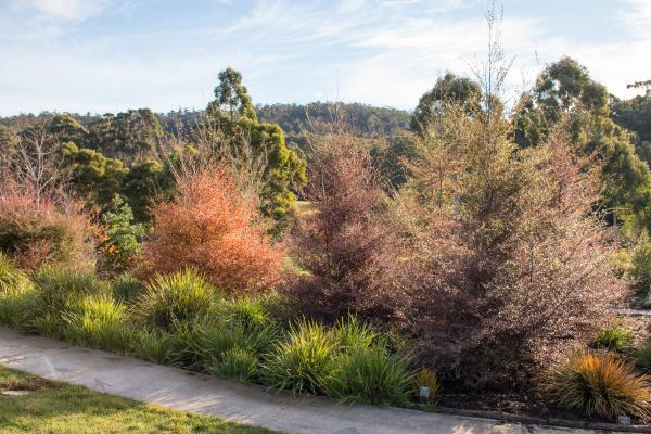 Autumn - Inala Jurassic Garden