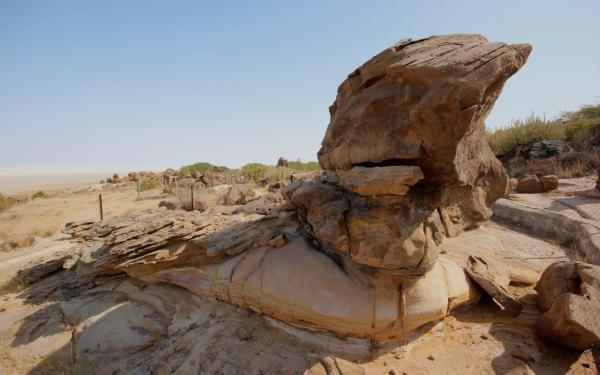 Dholavira Fossil Formations - Soar - Inala Nature Tours