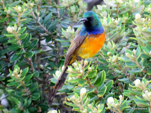 Alan Veevers - Inala Nature Tours
