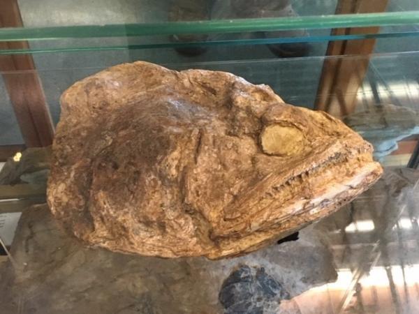 Fossil Fish - Tonia Cochran - Inala Nature Tours