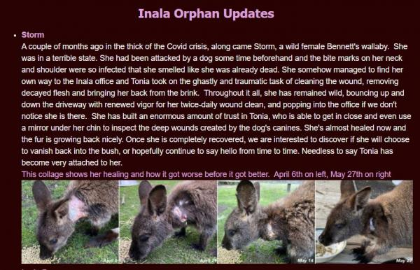 Orphan Update - Inala Foundation
