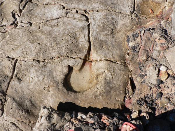 Therapod Track - Kerry Marvell - Inala Nature Tours